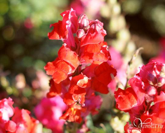 Сочные краски лета
