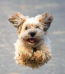 Я могу летать!